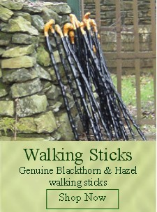 Blackthorn-walking-sticks